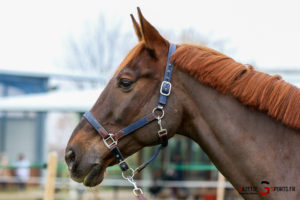 Equitation Pca (reynald Valleron (60)